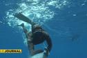 Bora Bora : de belles prises lors du championnat de pêche sous-marine