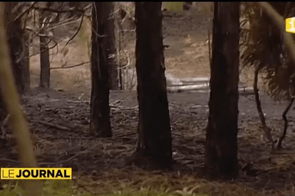 Incendie à Mahina : bilan et analyses après le drame