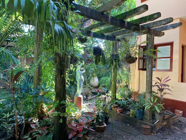 """""""Patrimoine : """"Les maisons créoles, l'art de vivre créole"""", une balade cayennaise à la rencontre du savoir-faire architectural de la période post-coloniale."""