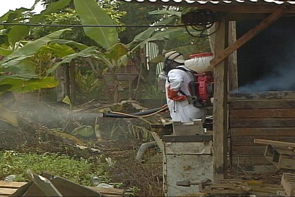 Dengue, le travail d'épendage