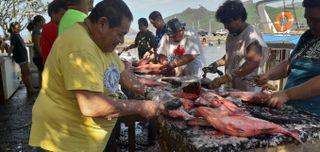 Pêche marquises