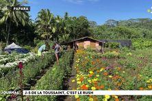 La Toussaint : le temps des fleurs