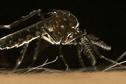Premier cas de Zika en Nouvelle-Calédonie