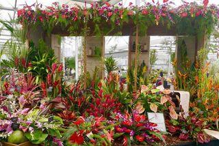 Exposition florale