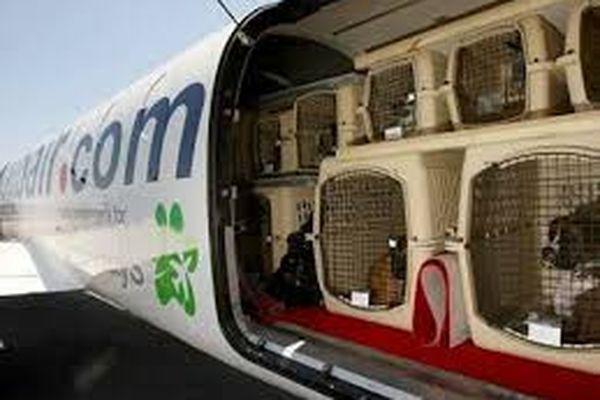 Bientot plus de quarantaines pour nos animaux de compagnies