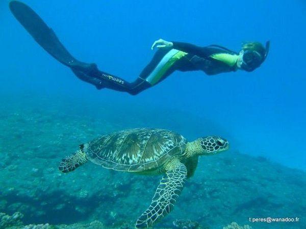 Journées tortues marines Kelonia