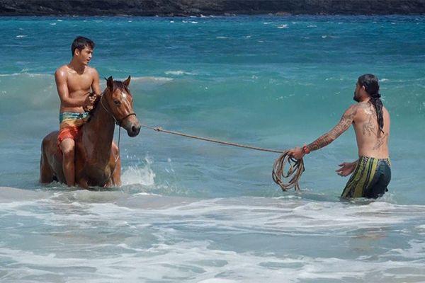 VIDEO.Ua Huka, l'île aux chevaux