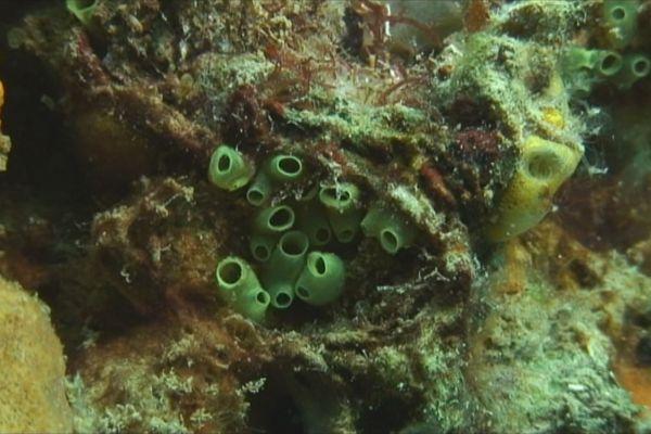 Les coraux en Martinique