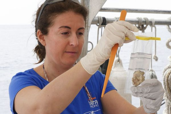 Tara Pacific : échantillon de coraux