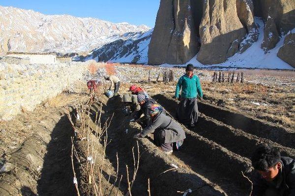 Plantations sur les hauts plateaux du Népal