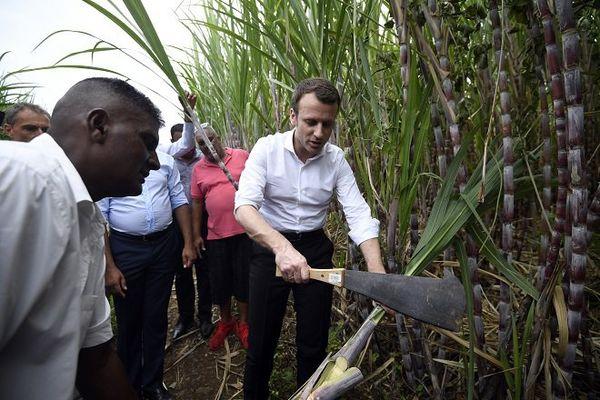 Macron dans un champ de canne à sucre à La réunion