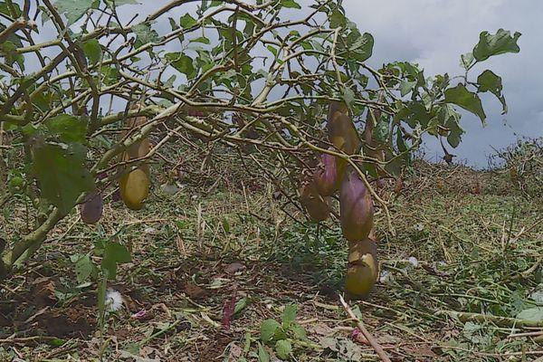 Confinement : les agriculteurs peinent à écouler leurs productions