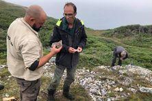 Maxime Pallares, Grégor Marchand, tous deux archéologues et Cédric Borthaire, référent archéologie pour l'Unesco scrutent la carrière située près de l'étang du Bois brûlé à Saint-Pierre où ont été découverts des rhyolites.