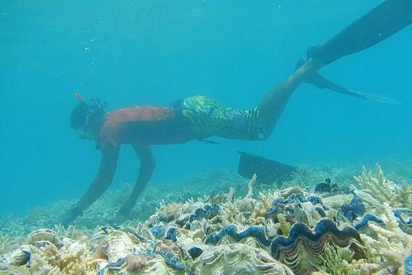 """""""Coquilage"""" primé au festival mondial de l'image sous-marine"""