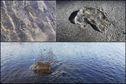 Les courants marins génèrent l'échouage de nombreuses méduses à Schoelcher