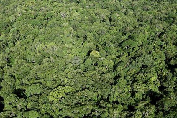 Forêt amazonienne de Guyane