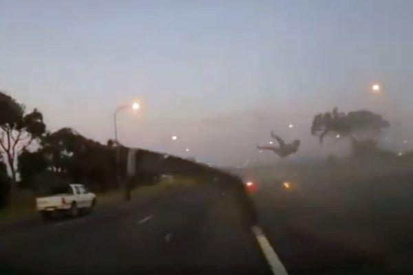 accident afsud ceinture