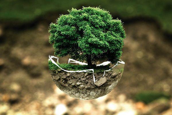 Environnement : peut mieux faire !