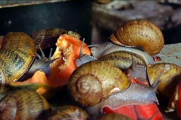 Par lé O par lé Ba : Escargots