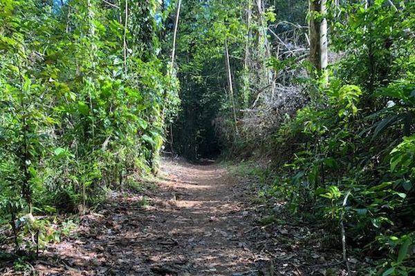 Sentier du Rorota