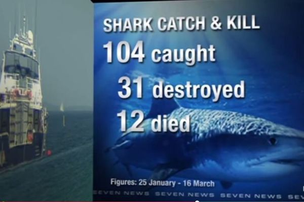 shark and kill australie