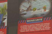 La Direction de la Biosécurité avait lancé une campagne de prévention a destination des animaux de compagnies au début de l'épidémie de la Covid-19.