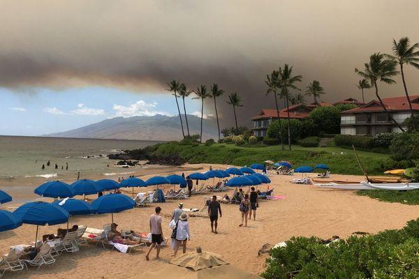 Hawaii: état d'urgence sur l'île de Maui / forêt