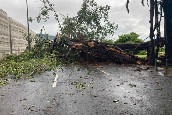 tempête Iman banian sur chaussée Butor front de mer Saint-Denis 070321
