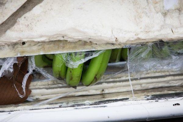 cargo bananes