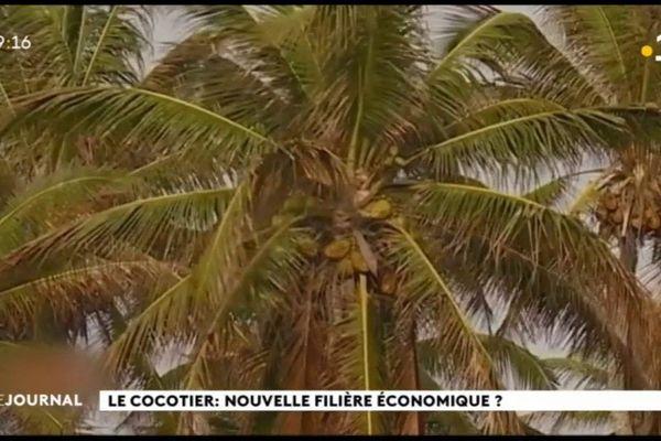 Comment améliorer la ressource produite par le cocotier ?