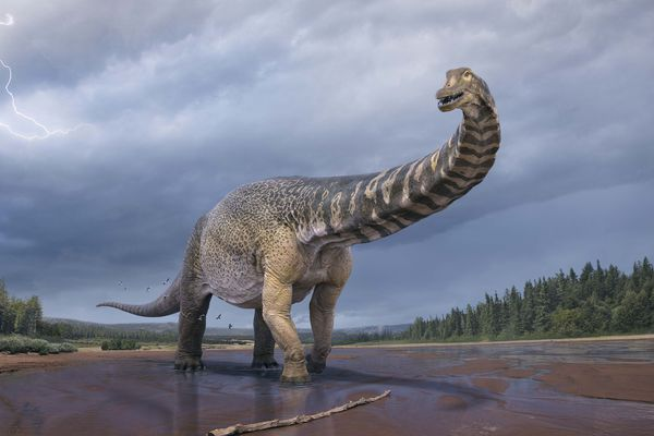 Dinosaure Australie