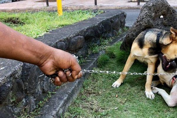 Rencontre avec « Clocharde » et son maître dans les rues de Papeete