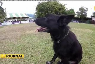 Concours de dressage canin à Pirae