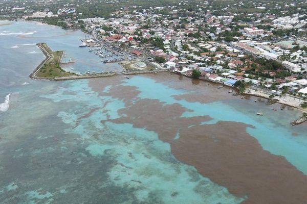 Les algues sargasses économie