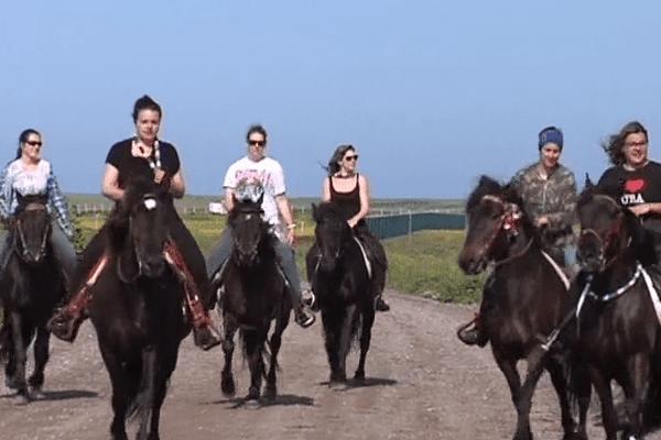 Course de chevaux et concours de chiens