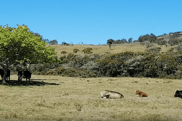 20171512 Vaches