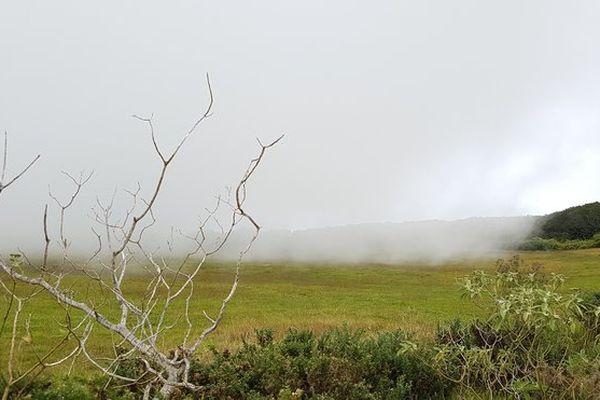 Brouillard sur la Plaine-des-Cafres