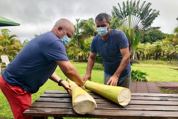 Palmiste exploitation