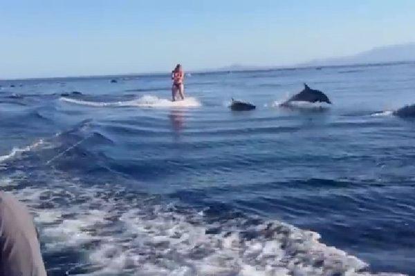 Wake et dauphins