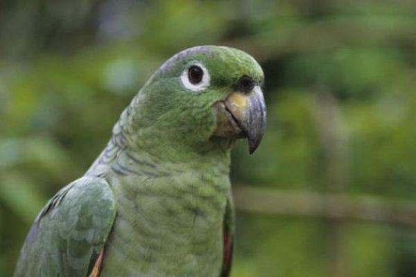 Californie Un Perroquet Revient Apres Quatre Ans De Fugue Et Parle Espagn