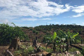 Les terres incriminées défrichées par les exploitants hmongs à Apatou