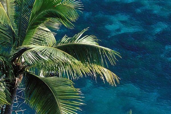 La Nouvelle-Calédonie veut protéger son exceptionnelle diversité de palmiers