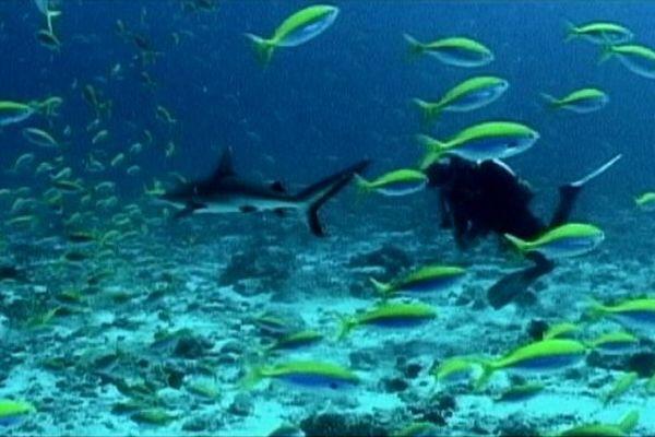 Système vigie anti-requin