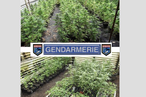 cannabis / paka