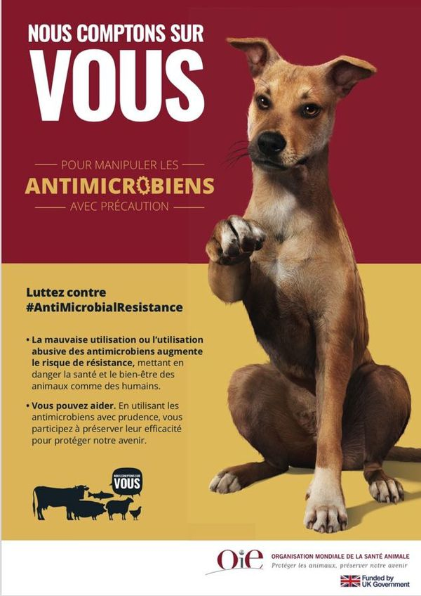 Antibiotiques santé animale