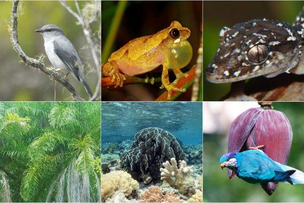 Liste rouge biodiversité