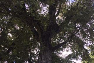 La Possession : arbres remarquables de France