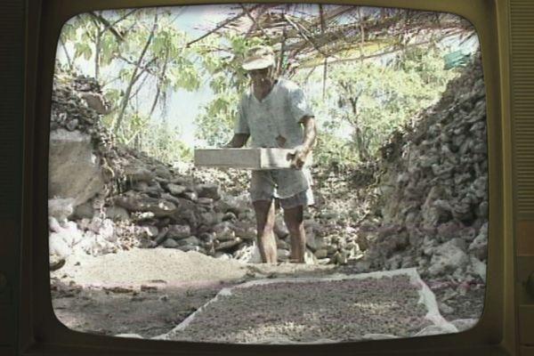 Ramassage coquillage rangiroa