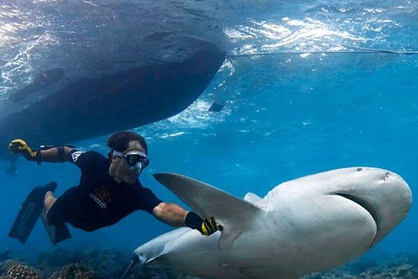 Les requins sont peu nombreux à attaquer l'homme pour le nuire