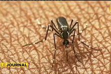 Chikungunya : plusieurs vaccins à l'étude